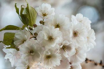 Dreaming of Flowers van Tanja de Boer