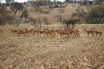 Safari von Annette van den Berg