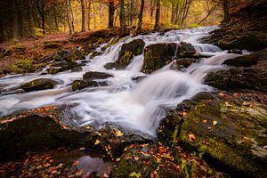 Herfst in het Harz gebergte van Martin Wasilewski