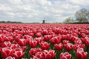 Tulpen en molen van Willem Holle WHOriginal Fotografie