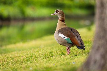 Canada Goose van videomundum