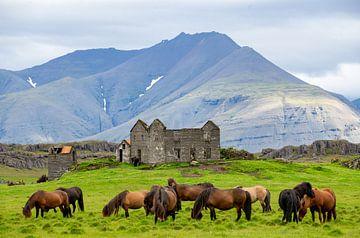 Chevaux islandais en ruine . sur Jan Fritz