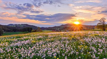 Schöner Sonnenuntergang mit Blumenwiese von Andreas Föll