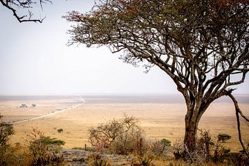 De Serengeti