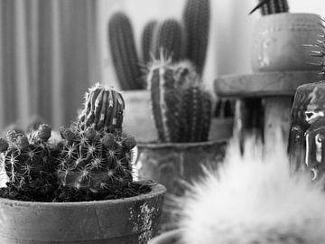 Een cactustuin in de woonkamer van Martijn Wit