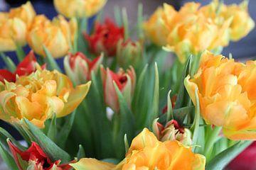 Tulpen von Nienke van den Brink