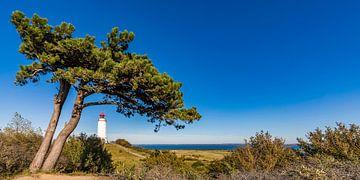 Leuchtturm Dornbusch auf der Insel Hiddensee von Werner Dieterich
