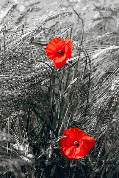 Mohnblumen im Kornfeld von Stefanie Keller
