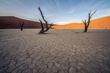 Verstoken van levengevend water van Joris Pannemans - Loris Photography