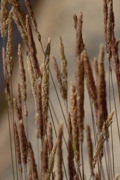 Sommerbild mit blühendem Gras von Anke Winters