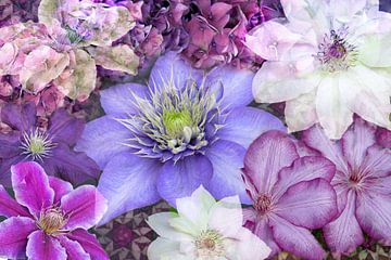 clematisblüten von christine b-b müller