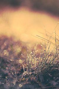 Reflecterend zomers ochtend dauw van