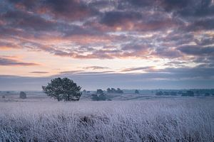 Frosty Sunrise van René Vierhuis