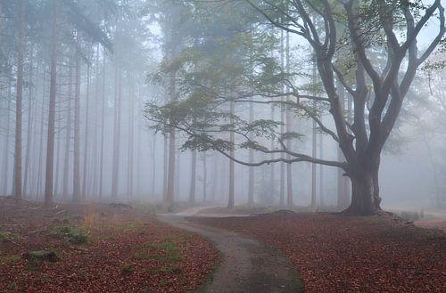 Walking into the fog von Olha Rohulya