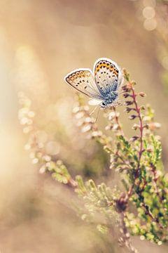 Heideblauwtje op de heide van Roosmarijn Bruijns