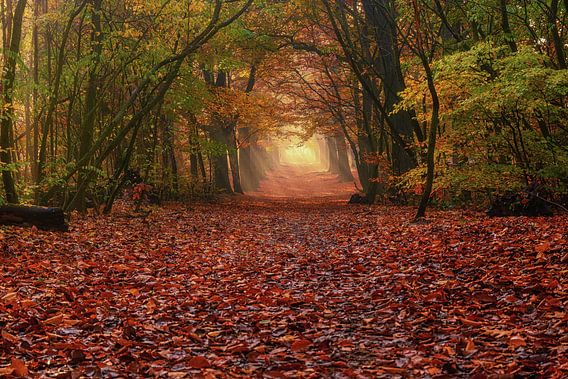 Het verlichte pad