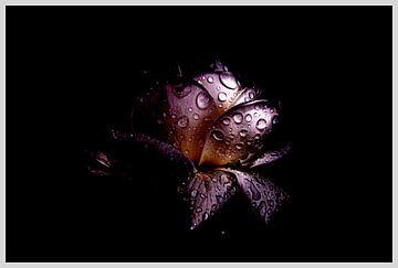 Feuchtrosen-Fantasie von Ribbi The Artist