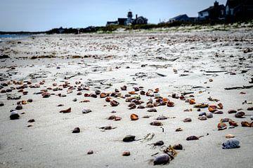 Schelpen op het strand op Cape Cod van H Verdurmen
