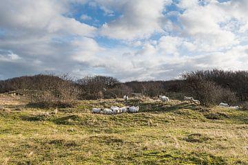 Schaf von Johanna Blankenstein