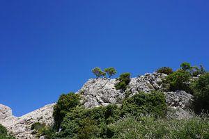 Bomen aan de kust van Kroatië van Dominic Corbeau