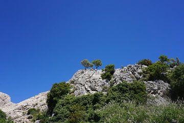 Bäume an der Küste von Kroatien von Dominic Corbeau