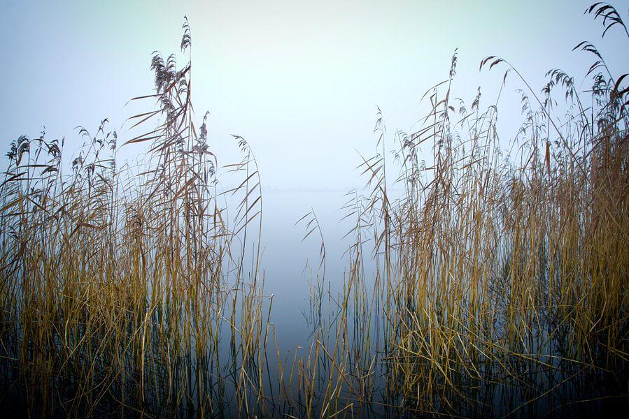 Riet en mist van Sybren Visser