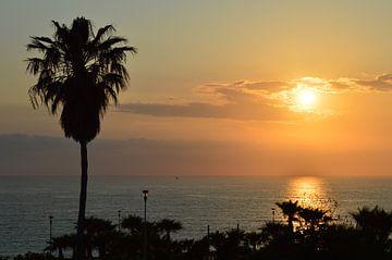 Mooie zonsondergang boven zee met palmen op de voorgrond van
