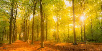 buchenwaldlandschaft mit braunen goldenen Blättern von Sjoerd van der Wal