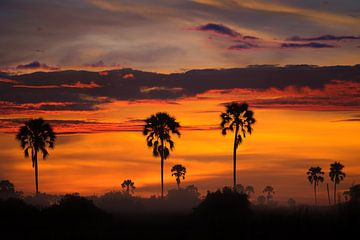 Sonnenaufgang über dem Okavango-Delta von Jos van Bommel