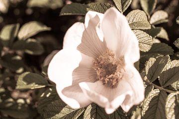 Witte bloem van Jane Changart
