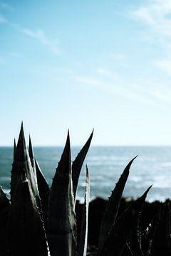 Aloe Vera Kaktus Pflanze am Meer von AIM52 Shop