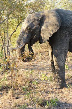 Elefant von Christel Smits