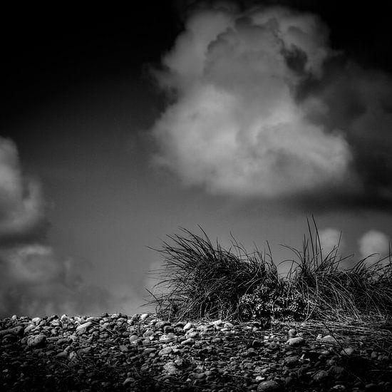 Grass on the rocks