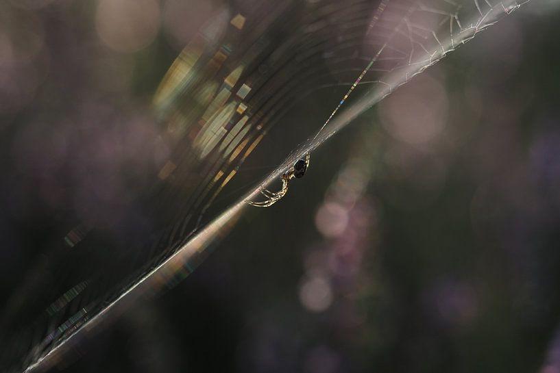 Spinne im Netz bei Sonnenaufgang (II) von Astrid Brouwers