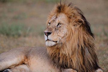 Löwe - Der König von Henk Bogaard