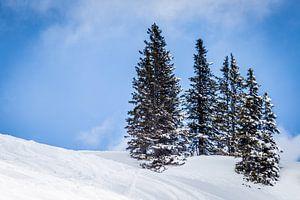 Landschap met besneeuwde bergen en naaldbomen tegen blauwe lucht met zachte wolken