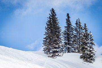 Landschap met besneeuwde bergen en naaldbomen tegen blauwe lucht met zachte wolken van