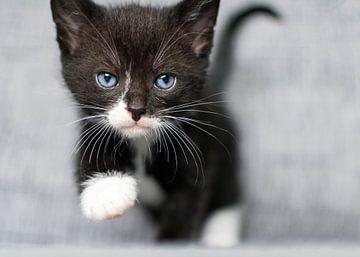 Le chaton s'approche de vous sur Christa Thieme-Krus