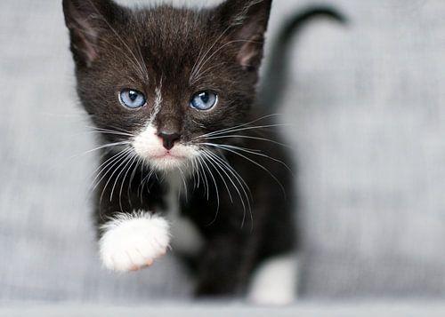 Kitten loopt naar je toe van