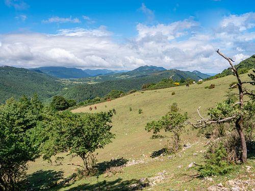 Heuvelachtig landschap met paarden in de wei