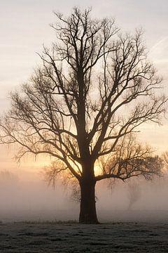 Silhouet van een kale boom in de ochtend mist tijdens zonsopkomst von Leoniek van der Vliet