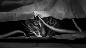 Die Katze im Sack von Renske Spijkers