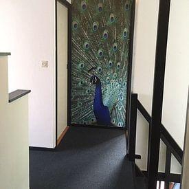 Klantfoto: Trots van Elles Rijsdijk, op naadloos behang