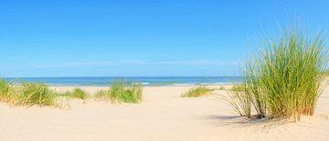 Dunes à la plage pendant l'été sur Sjoerd van der Wal