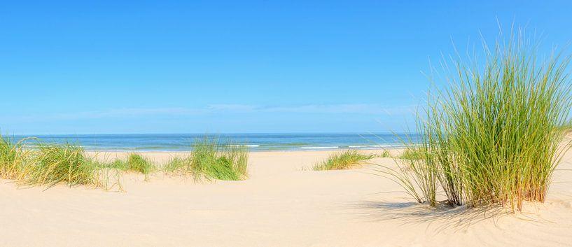 Duinen aan het strand tijdens de zomer van Sjoerd van der Wal