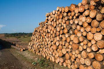grote stapel hout in het bos