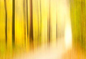 Een pad langs kunstige bomen van