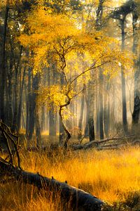 Golden Autumn van Thomas Jansen