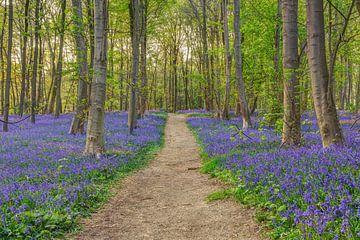 Bos van blauwe bloemen van Michael Valjak