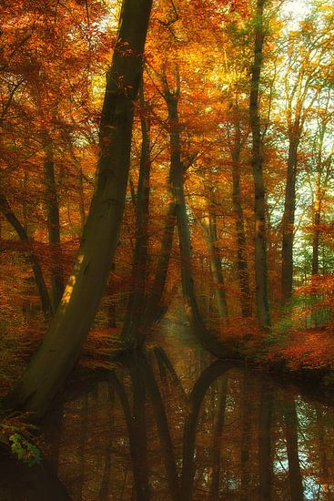 Herfst in Twickel van Truus Nijland